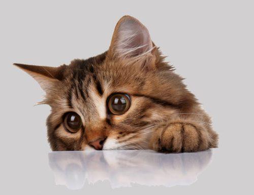 Katzenverordnung