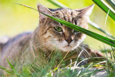 Katzen Kastrationsfond