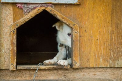 Tierschutzfall – was tun?