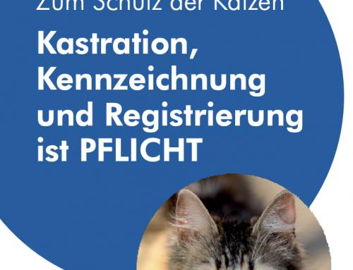 Neuer Flyer zur Katzenverordnung
