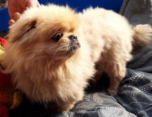 Pong Pong – wer kennt diesen Hund –
