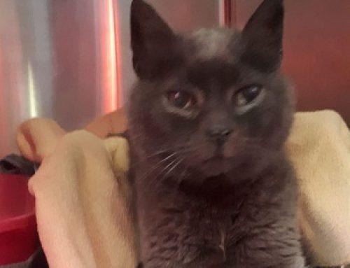 wer vermisst seine Katze in Reekenfeld