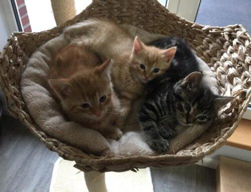 Paplo, Paul und Chihiro