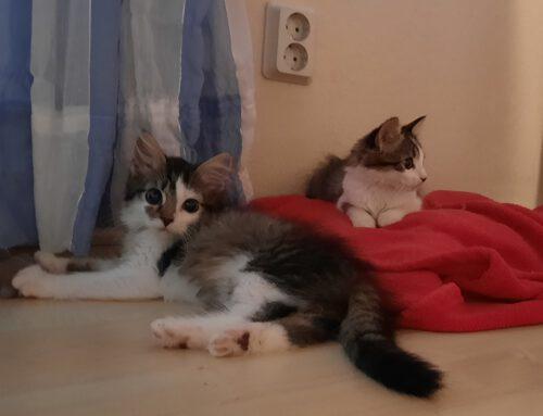 Pia und Penny